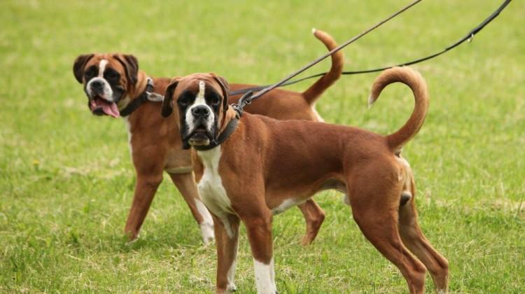 dog walking franchise