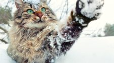Cat Safety Tips Winter