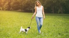 Why Hire A Dog Walker