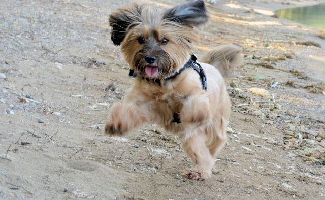 Dog Jump On Me