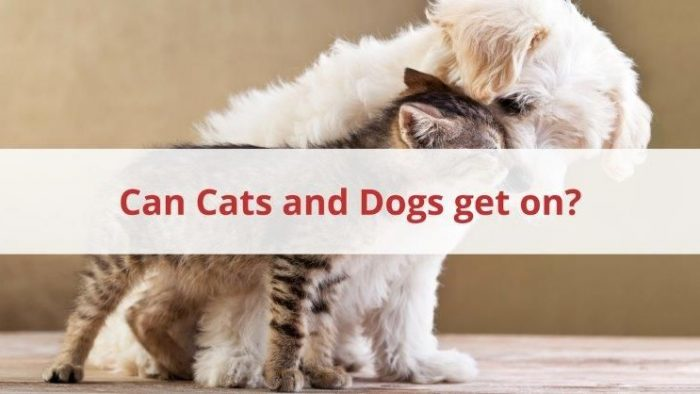 Can Cats And Dogs Get On