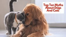 Top Ten Myths About Dogs And Cats
