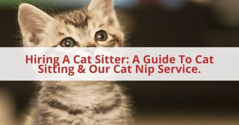 Hiring A Cat Sitter