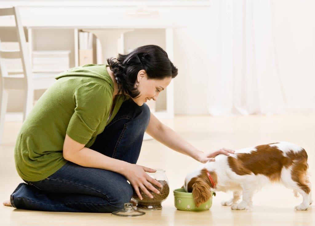 Trust Pet Sitter Dog Walker