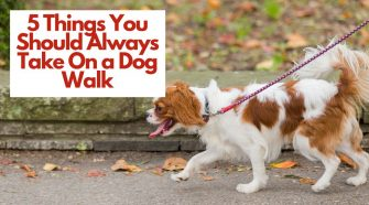 5 Things You Should Always Take On a Dog Walk