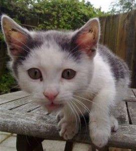 Cat Sitter Dublin