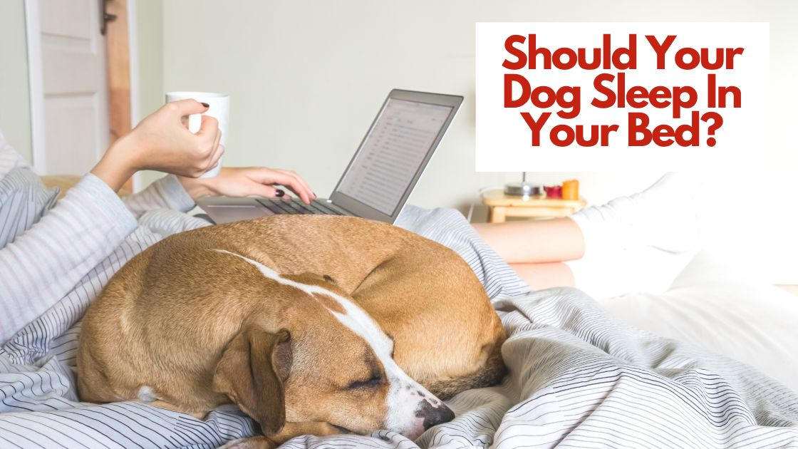 Should Your Dog Sleep In Your Bed