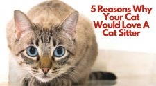 5 Reasons Why Your Cat Would Love A Cat Sitter To Care For Them