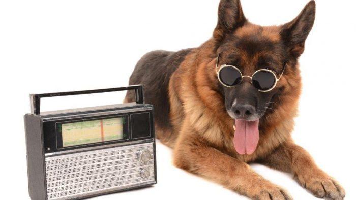 Radio dog