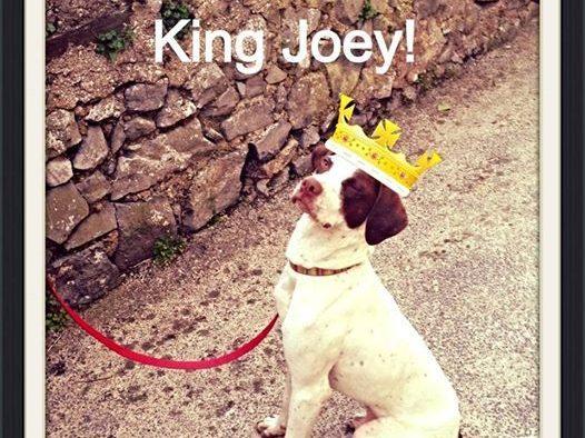 Dog Training With Joey