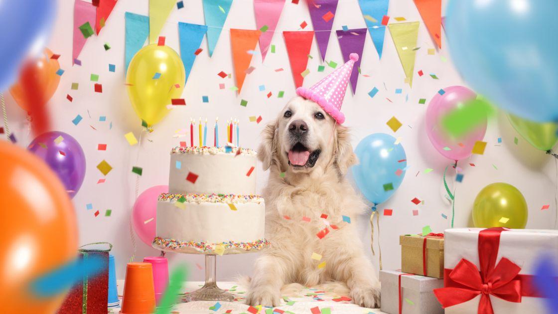 cake for dog birthday