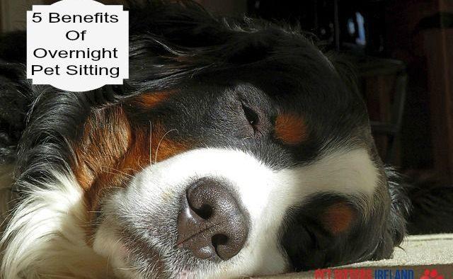 5 Benefits Of Overnight Pet Sitting