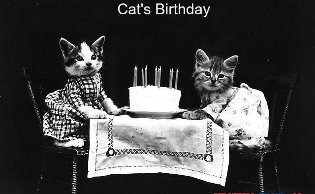 5 Memorable Ways to Celebrate Your Cat's Birthday