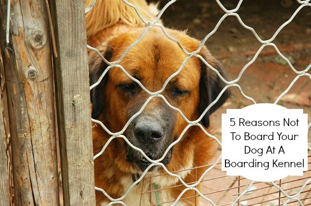 5 Reasons Not To Board Your Dog At A Boarding Kennel