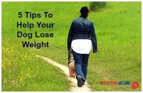5 Tips To Help Your Dog Lose Weight