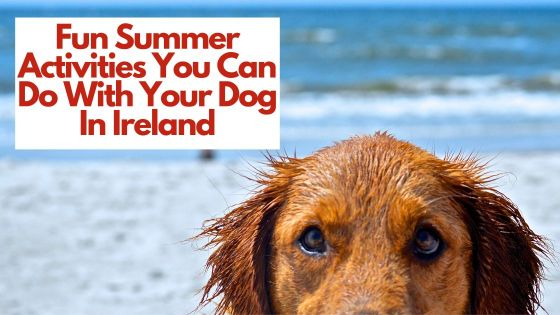 Fun Summer Activities You Can Do With Your Dog In Ireland