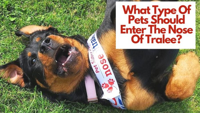 What type of pets should enter the nose of tralee