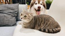 Home Safe pet Sitter