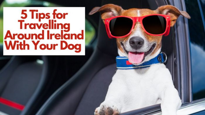 5 Tips for Travelling Around Ireland With Your Dog