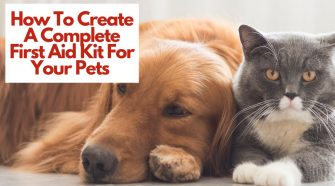 First Aid Kit For Your Pets