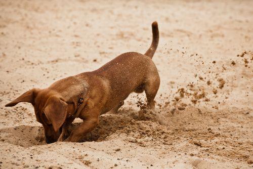 Why do dogs bury food