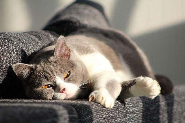 Cost of Cat Sitter