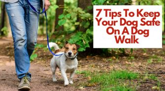 7 Tips To Keep Your Dog Safe On A Dog Walk