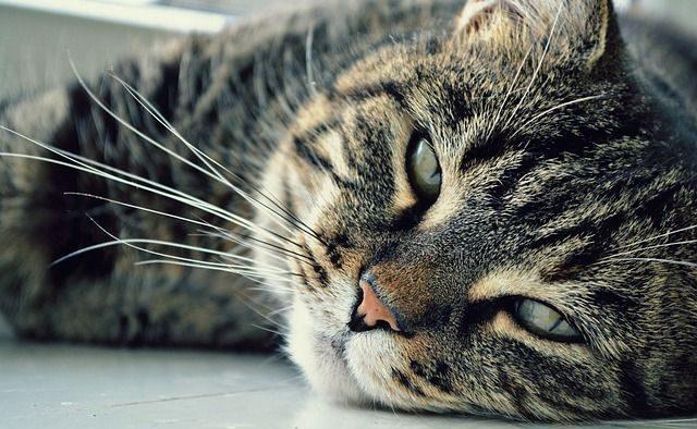 Pet Care Options