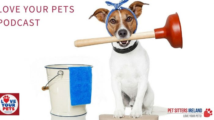 How To Get Rid Of Pet Urine Smells