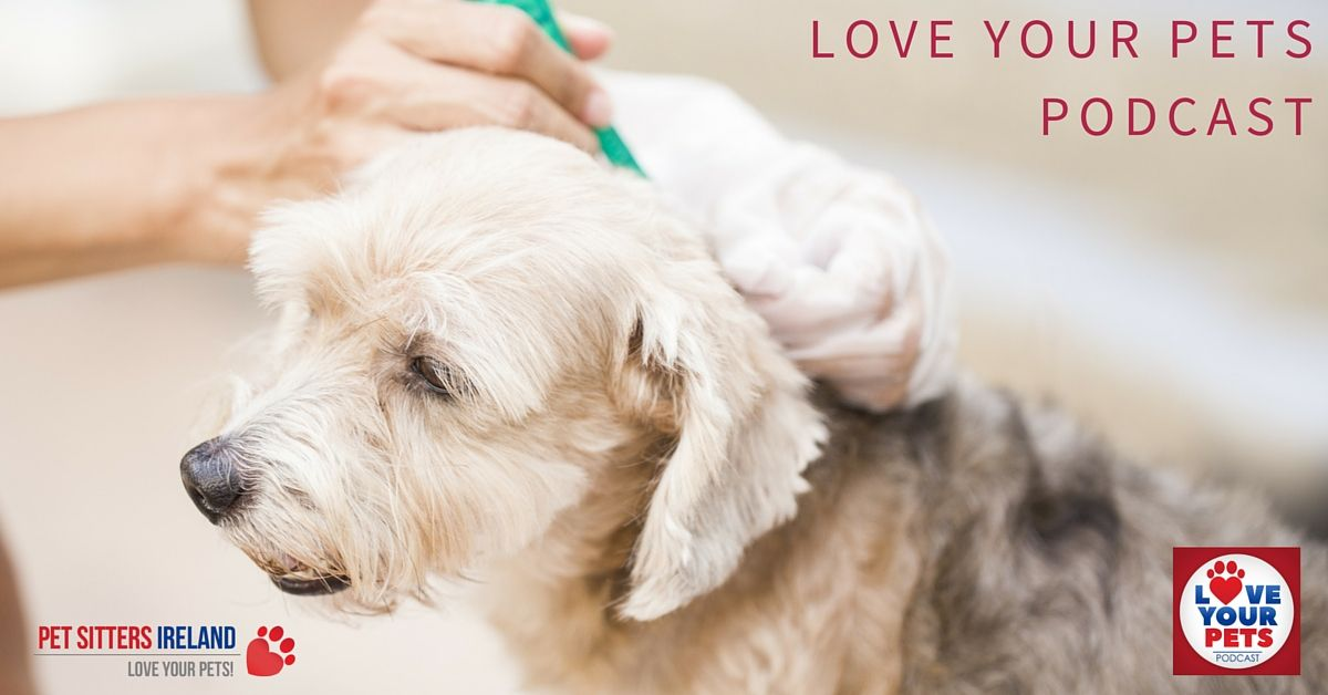 Monthly Treatments For Your Dogs