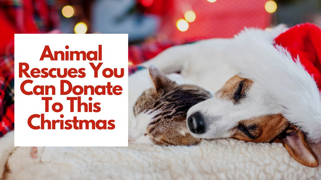 Animal Rescues You Can Donate To This Christmas