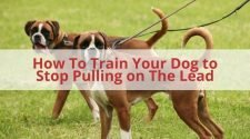 Train Your Dog To Stop Pulling On The Lead