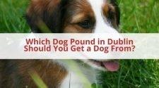Dublin Dog Pound