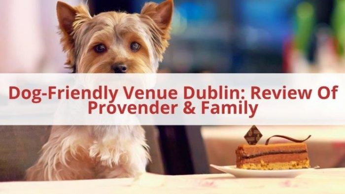 Dog Friendly Venue Dublin