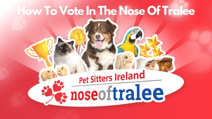 How To Vote in The Nose Of Tralee