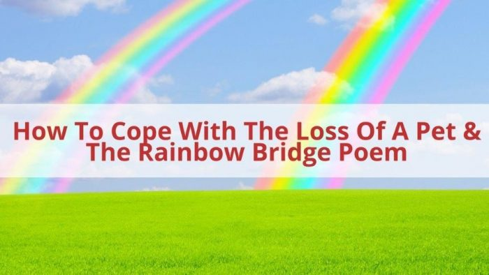 Cope with loss of pet
