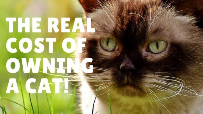How Much Owning Cat Cost