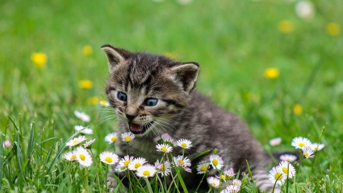 Kitten spayed