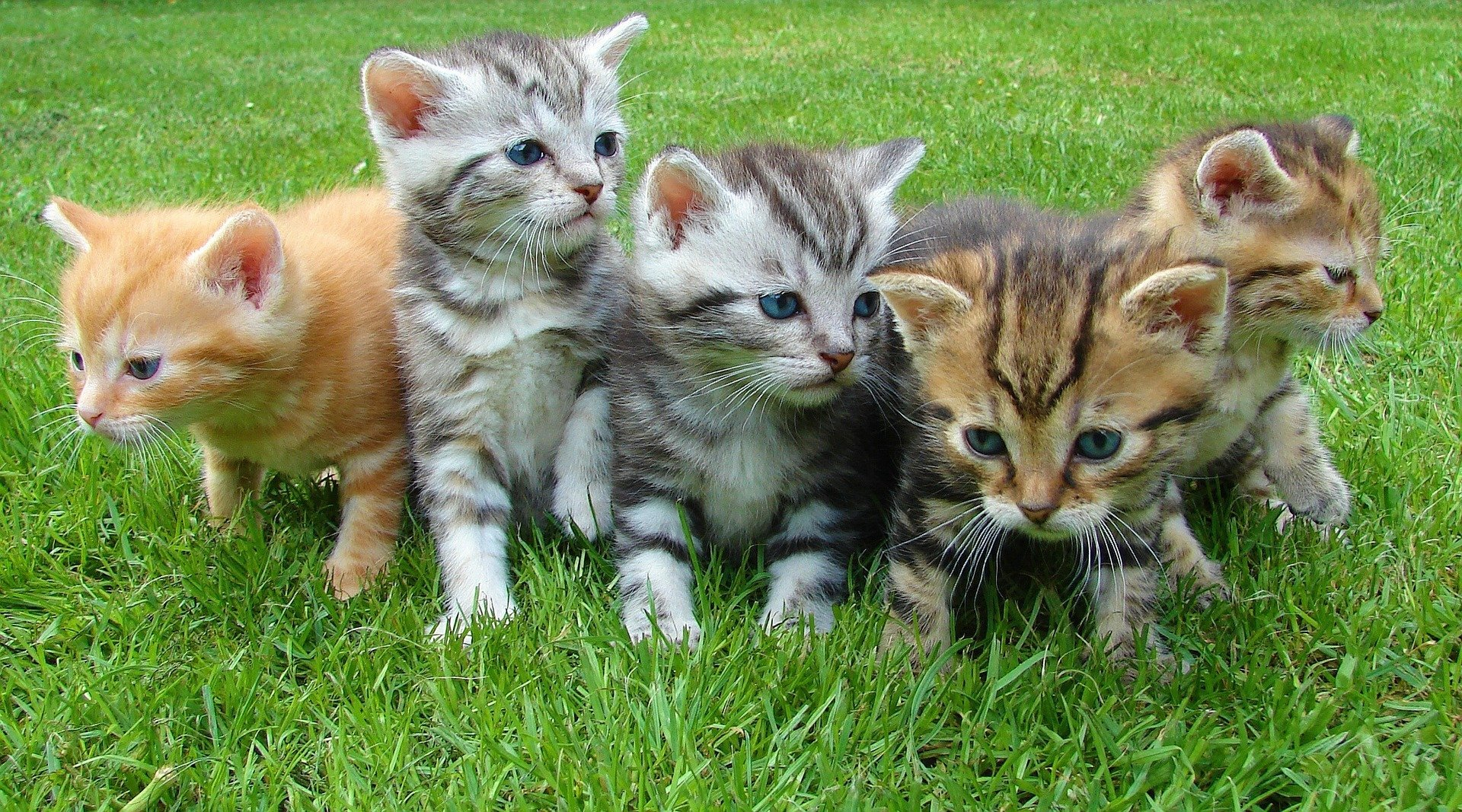 Kittens How To Treat And Prevent Worms Fleas