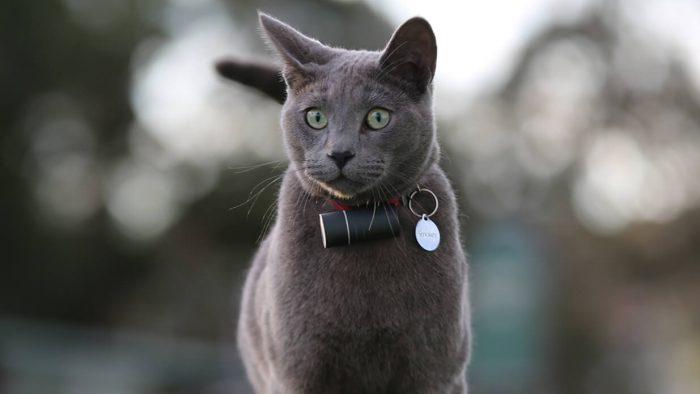 Pod Cat GPS Tracker