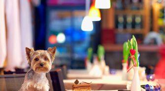 Dog Friendly Ireland Day