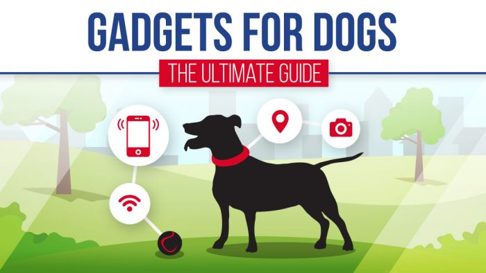 Gadgets For Dogs