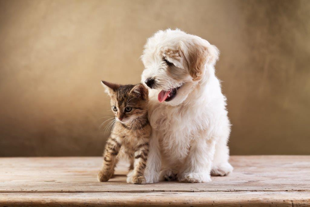 Puppies Versus Kittens