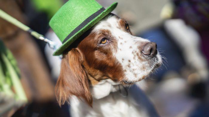 St.Patrick s Day