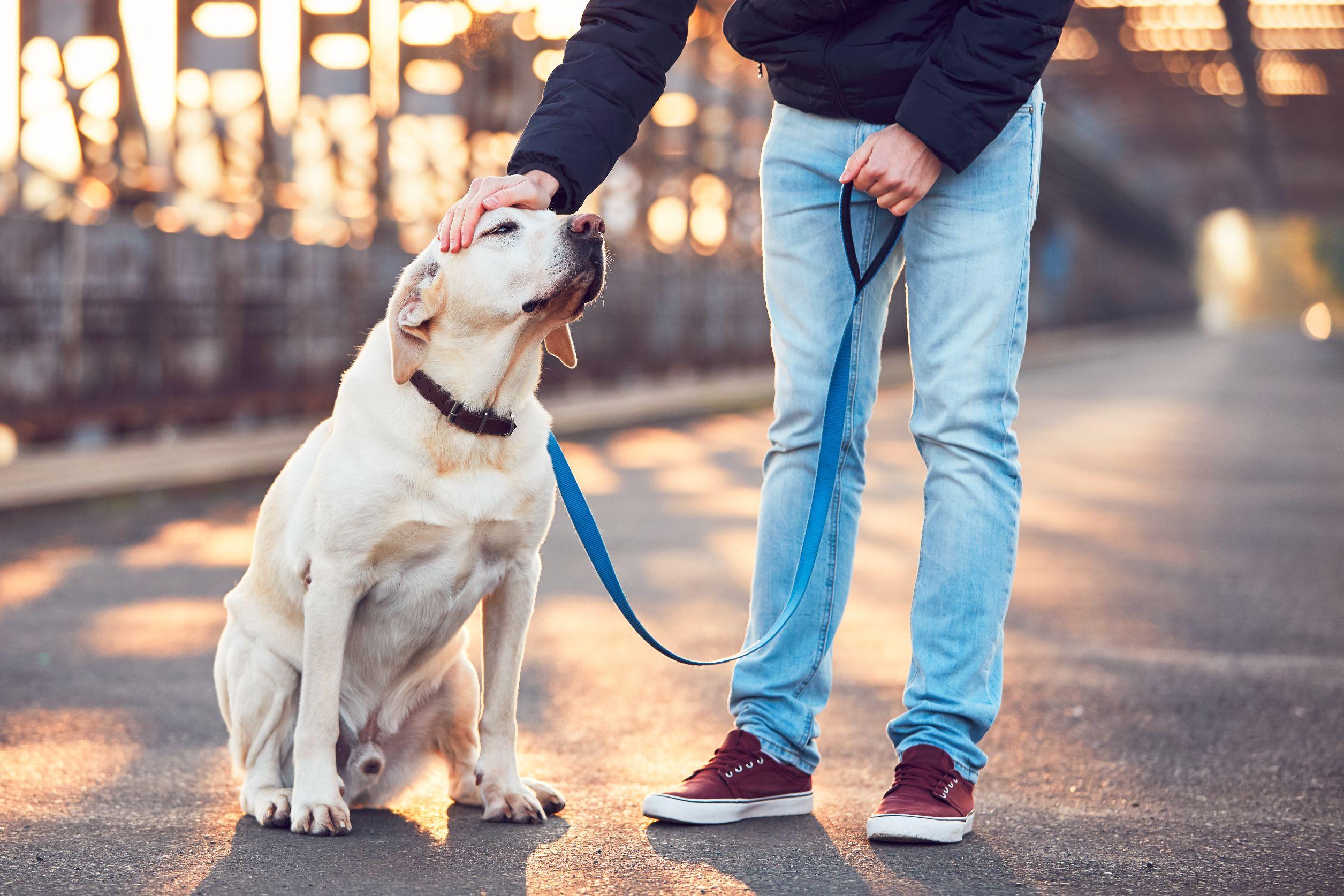 Dog Walker Quiz