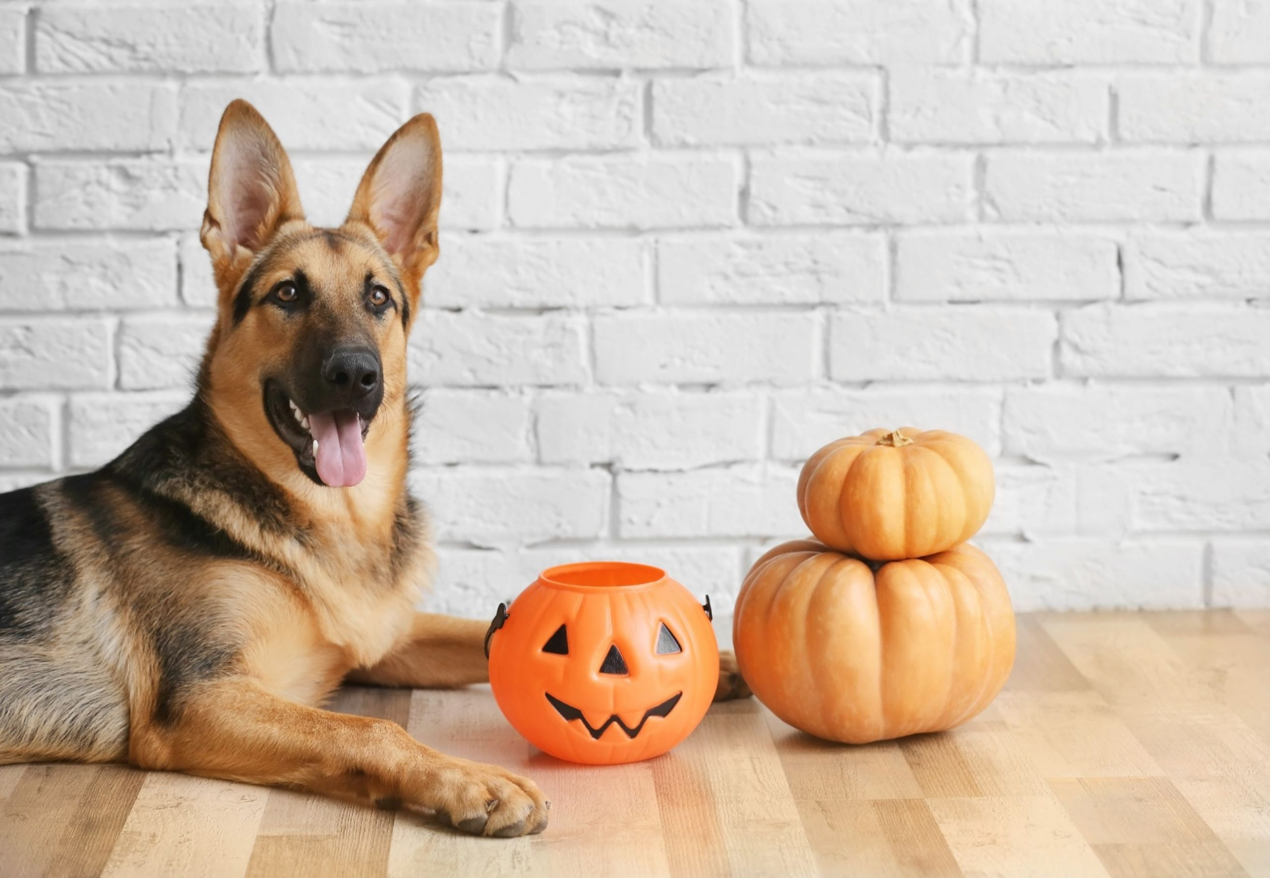 Halloween Scavenger Hunt For Dogs