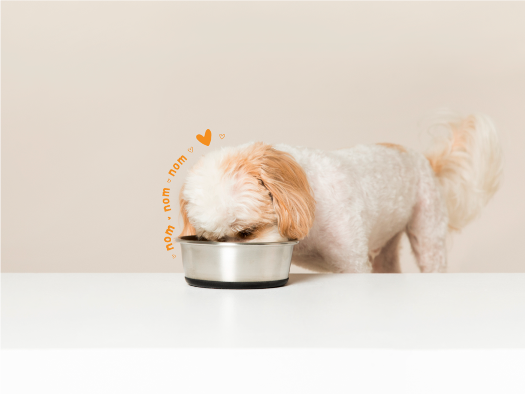 Tips To Choose The Right Dog Food