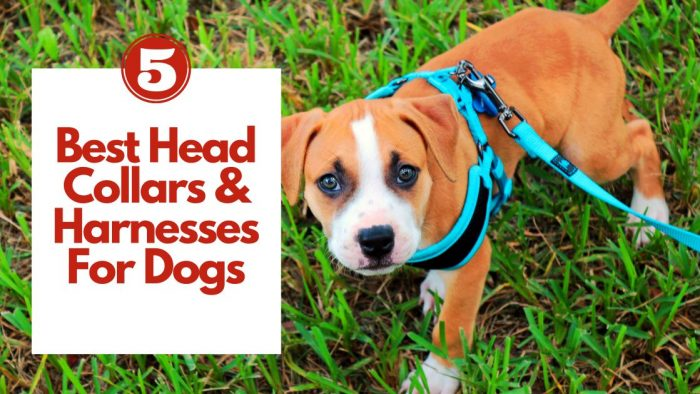 5 Best Head Collars & Harnesses For Dogs