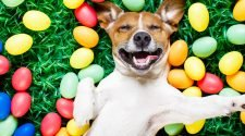 5 Things To Do At Home This Easter With Your Pets