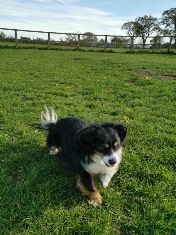 Corkagh Dog Park Dubin